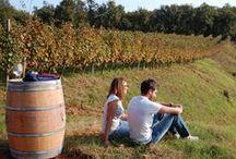 Aperitivo in vigna / Un aperitivo in vigna, alla luce del tramondo, vini in degustazione e buffet, uno spettacolo teatrale....un modo semplice per scaldare l'anima..
