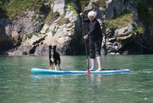 SUP Dogs / Our best friends enjoying Stand up Paddle Boarding. Follow our SUP adventures in Cornwall www.facebook.com/SUPinaBagUK
