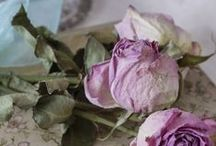 ~ DriEd PrEtTiEs ~ / Dried flowers,fruit,herbs and more. / by Diana Azzato