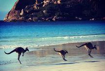 Travel~Australia