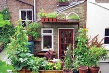 Pimp your roof terrace / Cant affarod a house with a garden?  Then make the most of your balcony/ roof terrace/ window boxes!