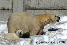 Veden vuosi: Jääkarhun pentu