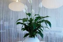 spathiphyllum spatifilyum / Spathiphyllum Çiçeği Bakımı v e resimleri / by Balıkesir Çiçek