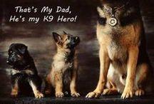 Német juhászkutya    (Deutsche Schäferhunde) / Német juhász Kutyák  #gsd #dog #german #shepherd #animal #cute #happy #gsdpuppy #big #training / by ♥ German Shepherds ♥