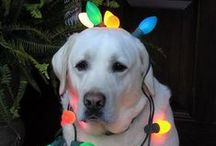 Holidays With Your Pet / Inspirational and fun ideas for you and your pet.