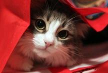 cutee!!!!! <3 <3 <3