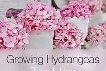 Gardening idea / Sustainable and beautiful gardening idea.