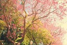 spring / Ihana kevät