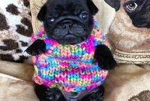 Adorbz of the day / adorable pets, children, animals, anything cute and adorable / by Sandra M