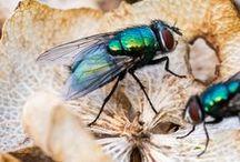 Florida Pests