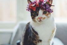 ✖️ flower crowns ✖️