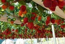 Gardening - Odling