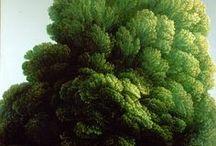 식물 : Botanica