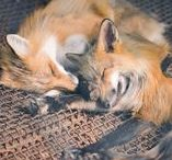 """RP : Two Foxes / Tao x Alex _______ """"Anywhere you go, I'll go with you. You and our family is the only thing that matters."""""""