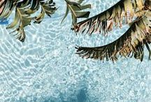 Palm Krazy / #Water, #Sun & Surf, #Palm Trees, #Mojitos and Peace
