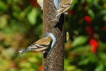 For the Birds! Droll Yankees bird feeders! / People and birds love Droll Yankees bird feeders!