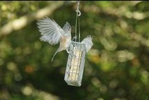 Caught in the act! / Birds on Droll Yankees feeders!