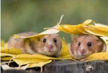Wonderful Wildlife