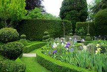 Handsome Hedges