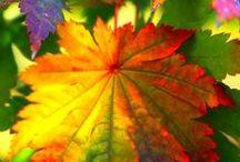 Autumn Inspiration / Autumnal garden ideas