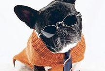 psí móda