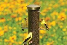 Finches / Products to attract and enjoy finches