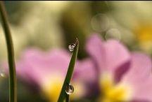 Suddenly Spring Time