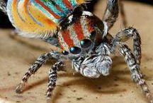 Insects and Arachnids / Aunque hallemos similitudes entre las arañas y los insectos, en realidad pertenecen a distintas familias. Las arañas corresponden a la clase de los arácnidos (Arachnida), mientras los insectos pertenecen a la clase Insecta. Aunque ambos grupos pertenecen al filo de los artrópodos.
