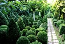 Top Topiary / A selection of topiary, big and small