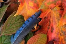 Pilgrims & Plumage—Fall Birds / Beautiful birds and Autumn leaves. From spooky Halloween birds to Thanksgiving turkeys, Droll Yankees has Fall birding covered!