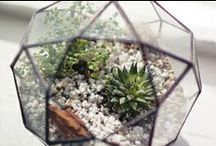 Terrarium / terrariums / by Moon to Moon