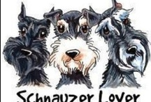 SCHNAUZERS !!!! / My favorite dog ever ! / by Deidre Simon