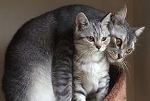 Cats & Kittens / PET LOVERS JEWELRY @ www.schaefdesigns.com / by Bobby Schaefer Schaef Designs Jewelry.com