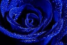 True Blue / by Ebonie Brace