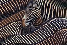 Black & White / by Bobby Schaefer Schaef Designs Jewelry.com