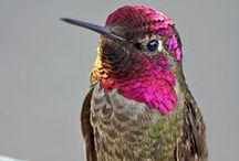 Hummingbirds / by Bobby Schaefer Schaef Designs Jewelry.com