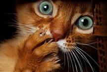 Cats  / I can't help it...I just love CATS!!!! / by Kim Hellinga Hammar