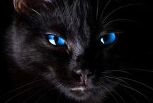 Cats Cats  / by Kim Hellinga Hammar