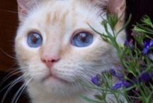 Cat Portraits / by Bobby Schaefer Schaef Designs Jewelry.com