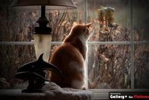 Cats Love for Windows / by Kim Hellinga Hammar
