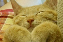 ORANGE TABBIES - XOXO / IN MEMORY OF OUR ONE OF A KIND CHARLIE. / by Pam McFadzean
