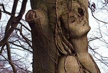 TREES- Unbelievable! / by Pam McFadzean