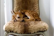 Doe a Deer…. / by Pam McFadzean
