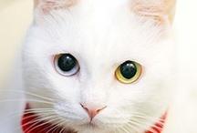 WHITE CATS / by Pam McFadzean