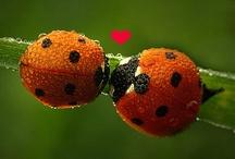 Ladybugs, Flyaway Home / by Pam McFadzean