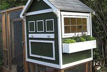 Chicken, Bunny, Hutches, Bee Hives