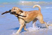 Summer Dog Health / How to keep your best friend cool during the dog days of summer.