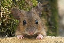 cute MOUSES