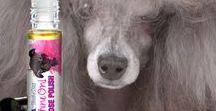 SHINE ON NOSE POLISH / Glossy Shine and Polish for Your Dog's Nose