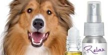 COLLIE / From their chiseled, intelligent faces to their glorious coats, Collies epitomize canine beauty. Unfortunately, many Collies also suffer from a medical condition commonly referred to as Collie Nose. NOSE BUTTER®, used as directed, will help alleviate Collie Nose symptoms.